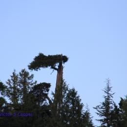 an-eagle's-nest
